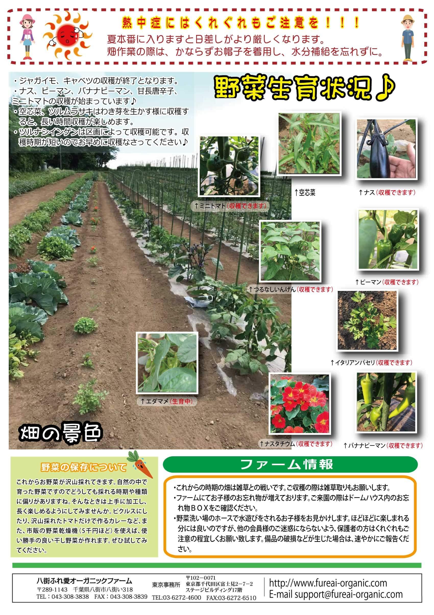 野菜生育状況 夏本番に入りますと日差しがより厳しくなります。畑作業の際は、かならずお帽子を着用し水分補給を忘れずに。