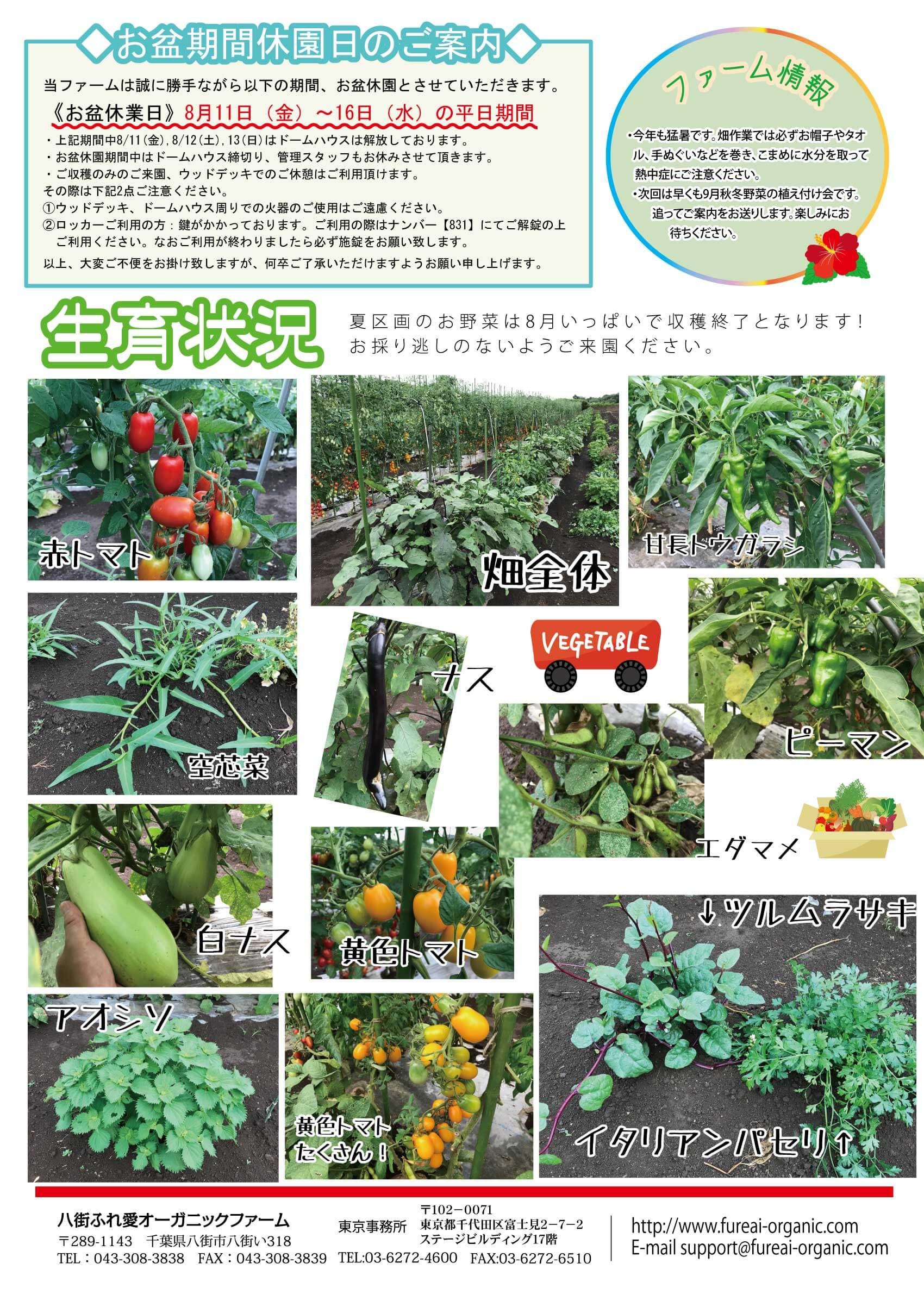 ファーム情報 今年も猛暑です。畑作業では必ずお帽子やタオル、手ぬぐいなどを巻き、こまめに水分を取って熱中症にご注意ください。次回は早くも9月秋冬野菜の植え付け会です。追ってご案内をお送りします。楽しみにお待ちください。