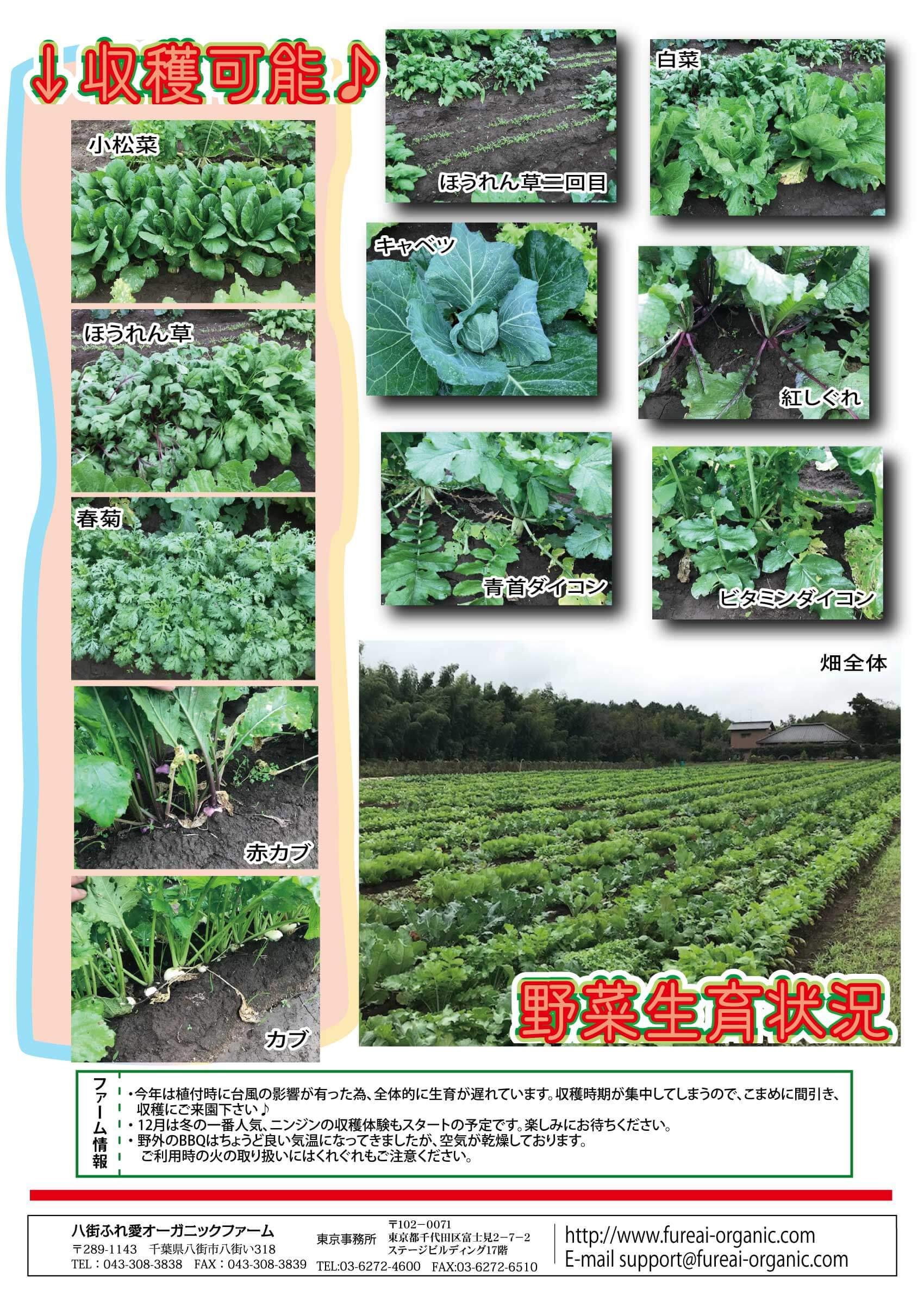 収穫可能 野菜生育状況