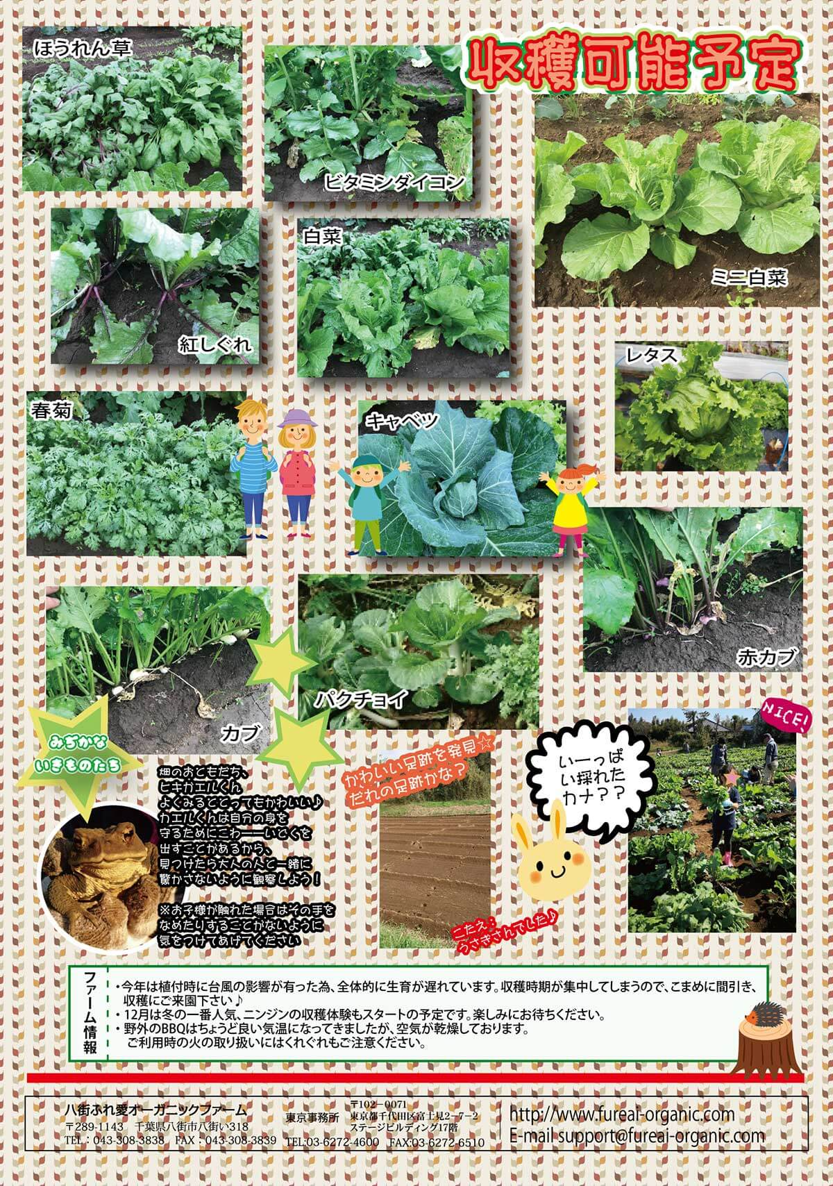 収穫予定野菜たち