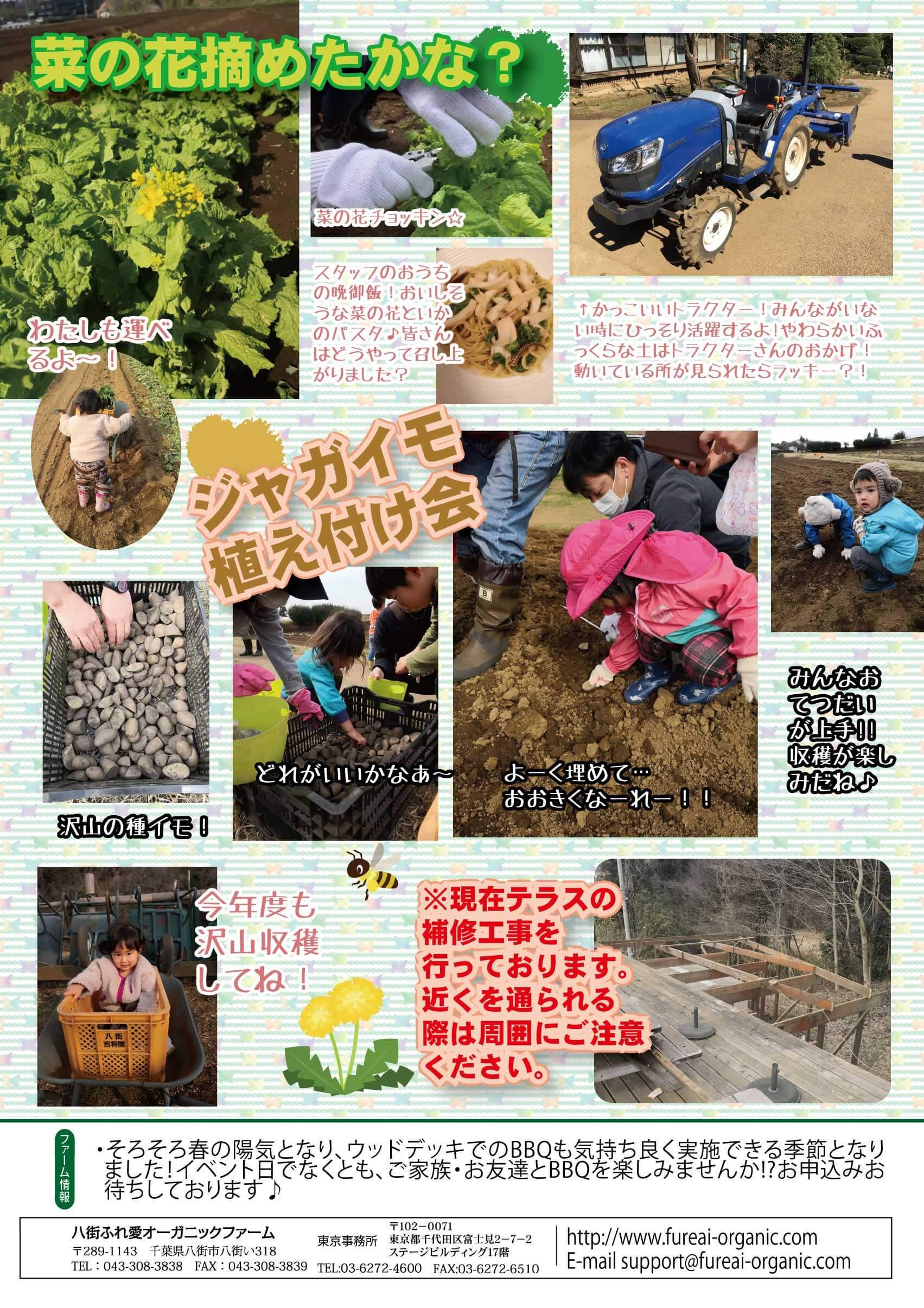 春・夏野菜種まき