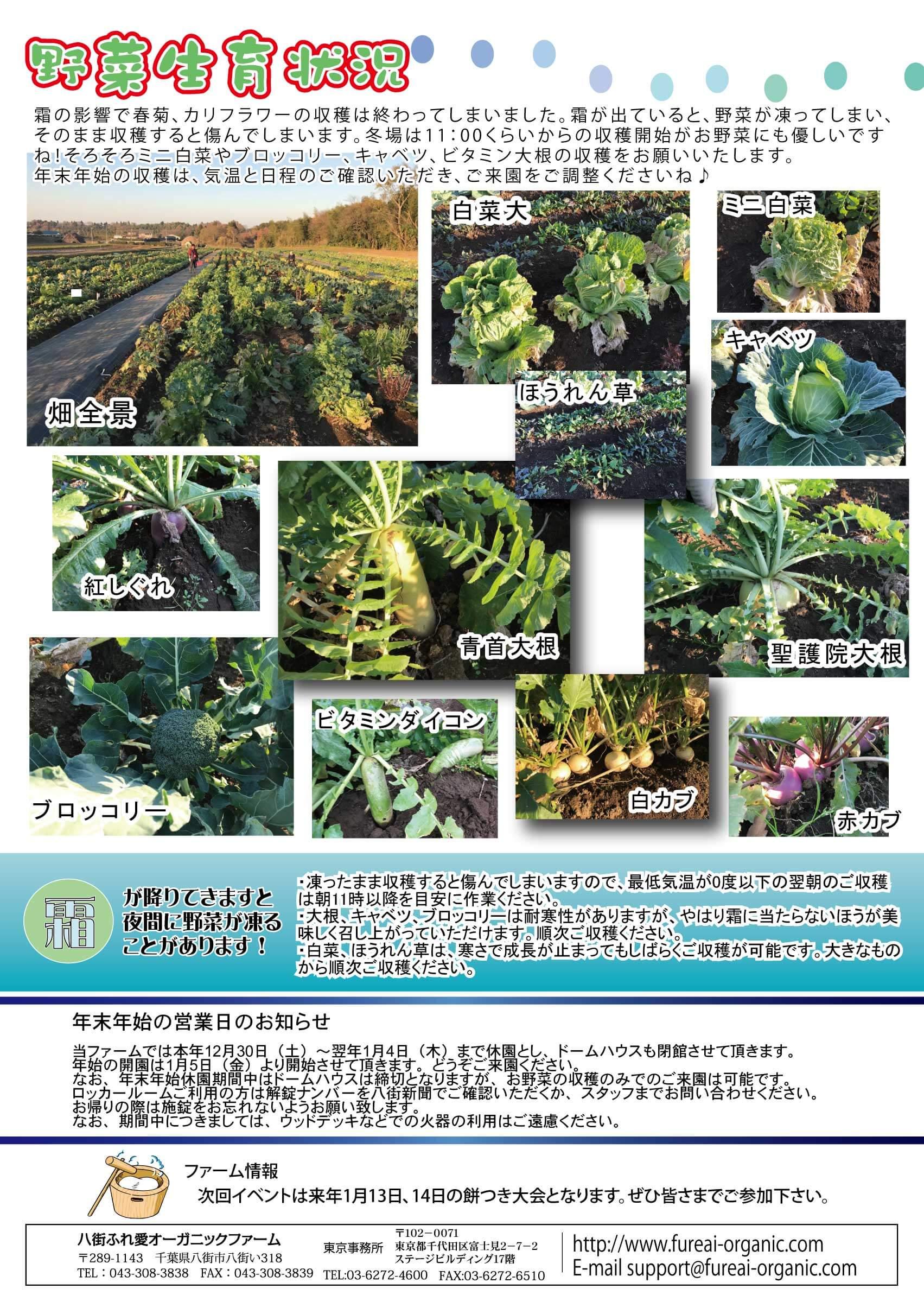 野菜生育状況