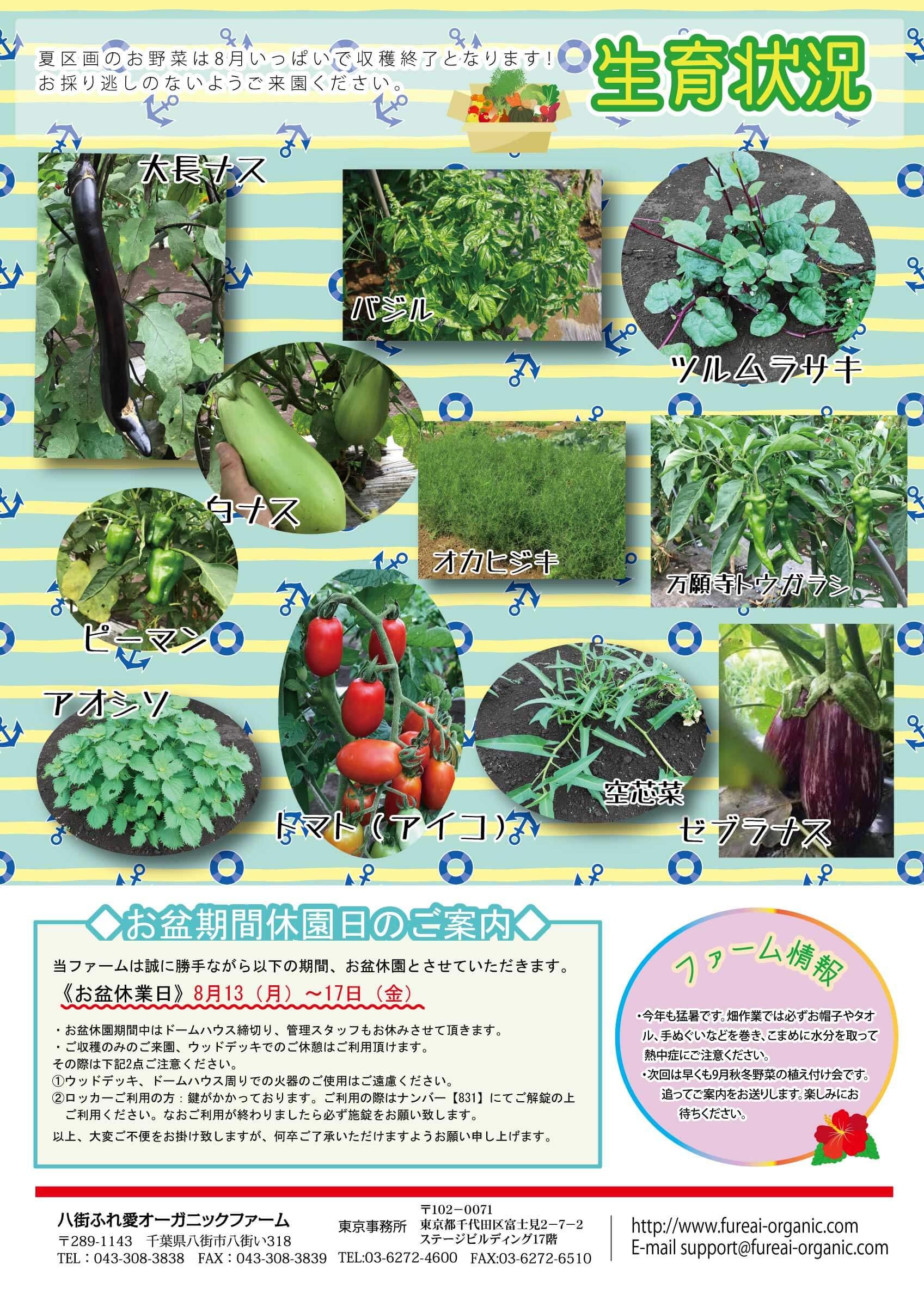 夏区画のお野菜は8月いぱいで収穫終了となります!おとりの逃しのないようご来園ください